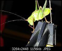 Kamera (Video- und Fotoqualität) vom Galaxy S III-20120729_110255.jpg
