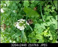 Kamera (Video- und Fotoqualität) vom Galaxy S III-20120729_143314.jpg