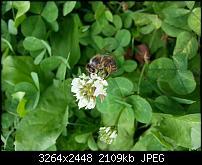 Kamera (Video- und Fotoqualität) vom Galaxy S III-20120729_143525.jpg