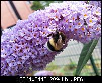 Kamera (Video- und Fotoqualität) vom Galaxy S III-20120729_151526.jpg