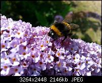 Kamera (Video- und Fotoqualität) vom Galaxy S III-20120729_152054.jpg