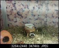 Kamera (Video- und Fotoqualität) vom Galaxy S III-2012-08-06-13.24.12.jpg