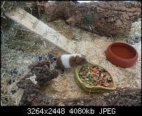 Kamera (Video- und Fotoqualität) vom Galaxy S III-2012-08-06-13.26.36.jpg