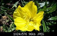 Kamera (Video- und Fotoqualität) vom Galaxy S III-uploadfromtaptalk1344766358328.jpg