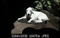 Kamera (Video- und Fotoqualität) vom Galaxy S III-20120813_132220.jpg