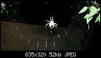 Kamera (Video- und Fotoqualität) vom Galaxy S III-spinne.jpg