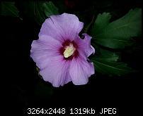 Kamera (Video- und Fotoqualität) vom Galaxy S III-20120901_201928.jpg