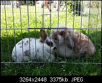 Kamera (Video- und Fotoqualität) vom Galaxy S III-2012-09-04-12.29.51.jpg