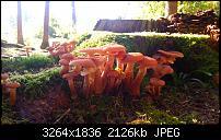 Kamera (Video- und Fotoqualität) vom Galaxy S III-2012-10-19-14.55.52.jpg