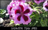 Samsung Galaxy S5 - Fotoqualität-1397777146594.jpg