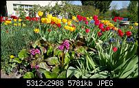 Samsung Galaxy S6 - Fotoqualität-20150423_163921_001.jpg