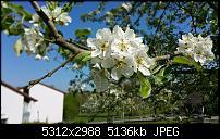 Samsung Galaxy S6 - Fotoqualität-20150423_152258.jpg
