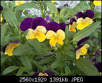 samsung omnia - zune- bilder unscharf-wp_000037.jpg