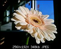 Kamera beim Omnia 7-wp_000209.jpg