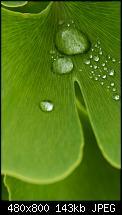 Wo gibts das Omnia 2 Hintergrundbild?-02_water_drop.jpg