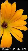 Wo gibts das Omnia 2 Hintergrundbild?-01_saffron.jpg