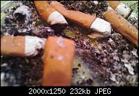 Fotoqualität des X1-dsc_0014.jpg