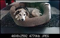 Sony Xperia XZ3 Kameraqualität-dsc_1933-1.jpg