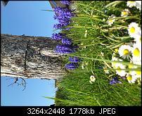Fotos / Videos mit dem Xperia Arc-dsc_0235.jpg