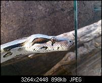 Fotos / Videos mit dem Xperia Arc-dsc_0050.jpg