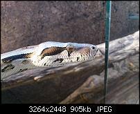 Fotos / Videos mit dem Xperia Arc-dsc_0053.jpg