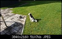 Sony Xperia XZ - Kamera Diskussionsthread-dsc_1353.jpg