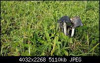 Sony Xperia XZ - Kamera Diskussionsthread-20161026_121604.jpg