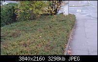 Sony Xperia Z3 - Fotoqualität-dsc_0013.jpg