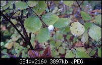 Sony Xperia Z3 - Fotoqualität-dsc_0023.jpg