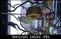 Sony Xperia Z3 - Fotoqualität-uploadfromtaptalk1415953013467.jpg