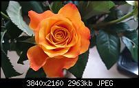 Sony Xperia Z3 - Fotoqualität-dsc_0027.jpg