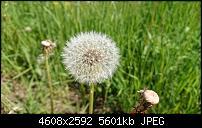 Sony Xperia ZX2 – Qualität der Fotos-dsc_1430.jpg