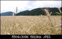 Sony Xperia ZX2 – Qualität der Fotos-dsc_1554.jpg