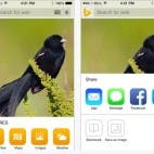 Bing App iOS 8