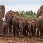 internet-of-elephants